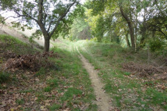 Le chemin juste avant Marsillargues