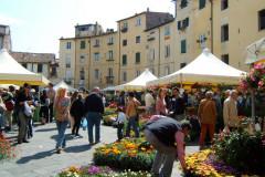 Piazza Anfiteatro et marché aux fleurs